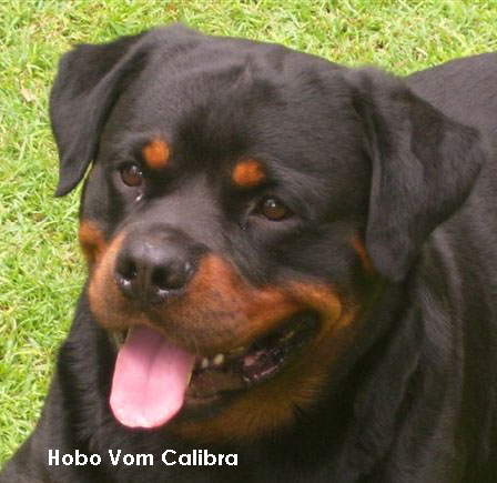 Hobo vom Calibra 3 years 13