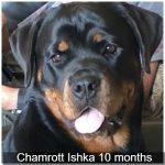 Chamrott Ishka 10 months